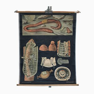 Vintage Earthworm Educational Chart