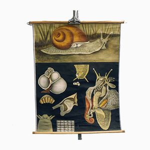 Vintage Snail Educational Chart