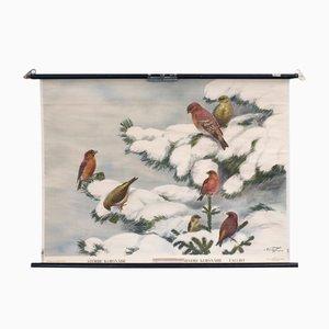 Cartellone educativo con uccelli di Nils Tiren per Nordstedt & Söner, 1931