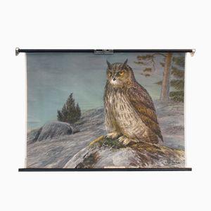 Affiche d'Ecole Owl par Nils Tiren pour Nordstedt & Söner, 1932