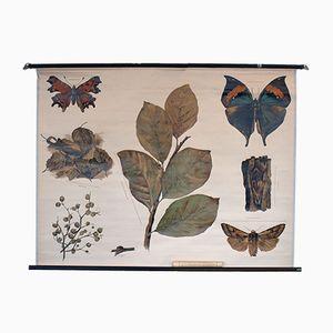 Vintage Schmetterling Schulwandkarte