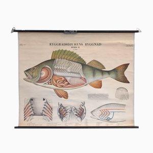 Cartellone educativo con pesci di Norstedt & Söner Stockholm, anni '50