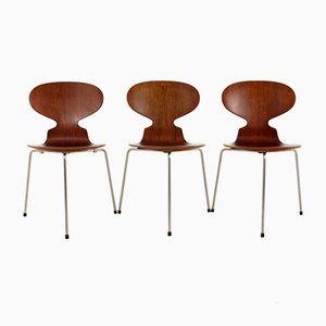 Vintage Model 3100 The Ant Chair by Arne Jacobsen for Fritz Hansen, Set of 3
