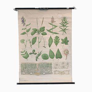 Vintage School Chart of Plants from Nordstedt & Söner