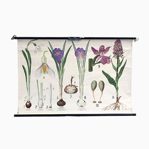Vintage Educational Poster with Snowdrops, Crocus & Orchis Plants from Chr. Cato Copenhagen