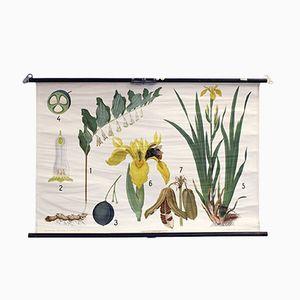 Vintage Schwertlilie & Weisswurz Schulwandkarte von Chr. Cato Copenhagen