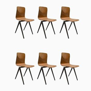 Industrial S22 Dark Brown School Chairs from Galvanitas and Pagholz, 1967, Set of 6