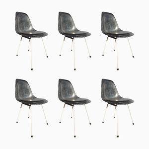 Blaue Vintage Stühle von Charles & Ray Eames für Herman Miller, 6er Set