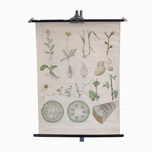 Botanical Wall Chart from Nordstedt & Söner Stockholm