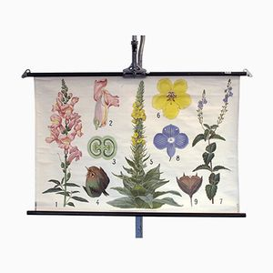 Stampa scolastica botanica vintage di fiori
