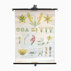 Vintage Blüten Schulwandkarte