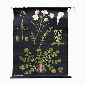 Cuckoo Flower Wall Chart by Jung-Koch-Quentell