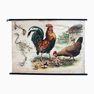 Hühner Lithographie von J. F. Schreiber, 1893