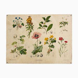 Antike Blumen Wandtafel von Hartinger & Beck, 1879
