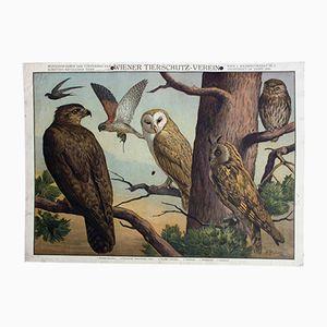 Wiener Tierschutz Verein Lithographie von W. Heubach, 1909