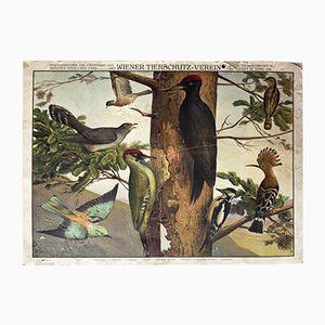 Cartellone sulla prevenzione della crudeltà sugli animali di W. Heubach, 1909