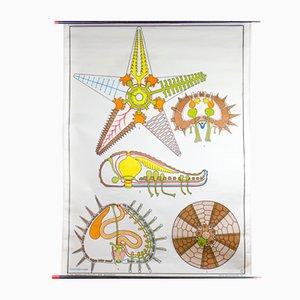 Stampa anatomica di stella marina di Dr Lip per Gerhard Gambke, 1969