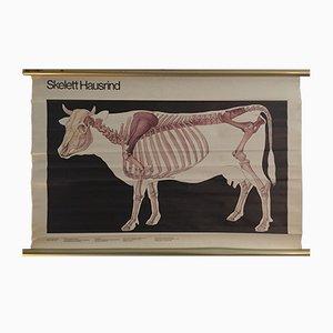 Kuh Anatomie Lehrtafel von Volk und Wissen, 1982