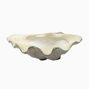 Clam Shell Vide Poche Bowl, 1950s