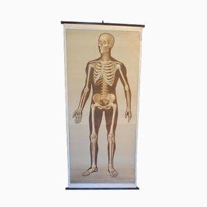 Vintage Skelett Lernplakat