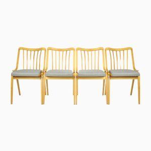 Gebogen Holzstühle von TON, 1950er, 4er Set