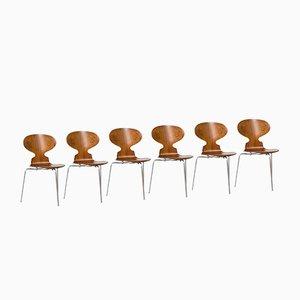 Dänische Ant Stühle aus Palisander von Arne Jacobsen für Fritz Hansen, 6er Set