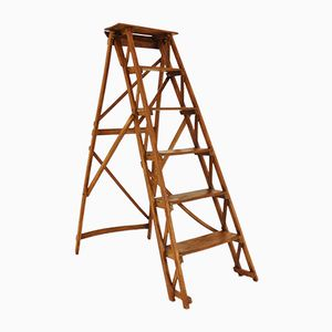 French Beech Ladder, 1950s