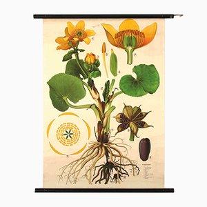 Tableau Marigold par Jung, Koch, and Quentell pour Hagemann, 1960s