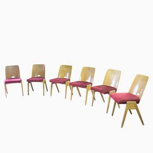 Tschechoslowakische Mid-Century Buche & Wildleder Esszimmerstühle, 1960er, 6er Set