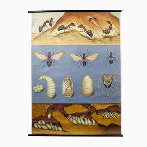 Stampa con formiche rosse di Jung, Koch, & Quentell per Hagemann, anni '60