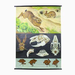 Hare & Rabbit Wall Chart by Jung, Koch, & Quentell for Hagemann, 1960s