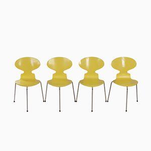 Gelbe Dreibein Ant Stühle von Arne Jacobsen für Fritz Hansen, 1950er, 4er Set
