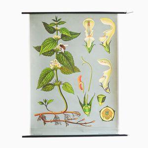 Botanische Vintage Schul Poster von Jung, Koch, & Quentell für Hagemann, 1963