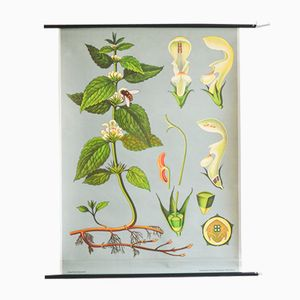 Vintage Botanical School Poster by Jung, Koch, & Quentell for Hagemann, 1963