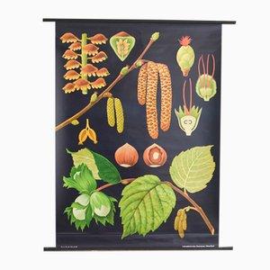 Botanical School Poster by Jung, Koch, & Quentell for Hagemann, 1960s