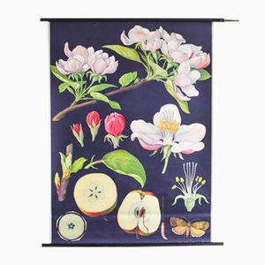 Vintage Botanical School Poster by Jung, Koch, & Quentell for Hagemann