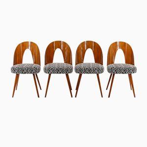 Stühle von Antonin Suman für Drevoimpregna n.p. Zavod Zilina, 1960er, 4er Set