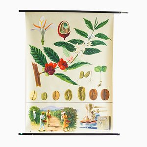 Stampa botanica vintage di Jung, Koch & Quntell per Hagemann