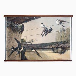 Tableau Mural Swallow par F. Zerritsch, 1954