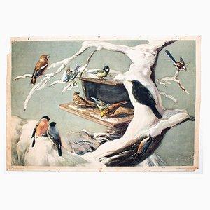 Vögel im Winter Wandtafel von F. Zerritsch, 1954