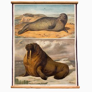 Seehund Wandplakat von Th. Breidwiser für Carl Gerolds Sohn, 1879