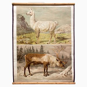 Antique Deer and Reindeer Wall Chart by Th. Breidwiser for Gerold & Sohn, 1879