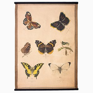 Butterflies Educational Chart, 1914