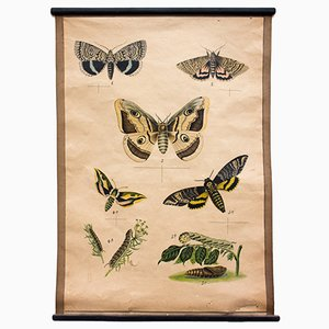 Butterflies Educational Lithograph, 1914