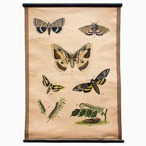 Schmetterling Wandplakat, 1914
