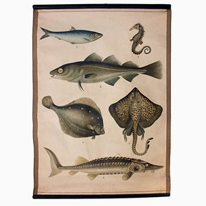 Fish Educational Chart, 1914