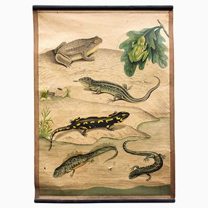 Amphibians Educational Chart, 1914