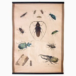 Bugs Educational Chart, 1914
