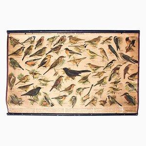 Wandplakat Vögel, 1948