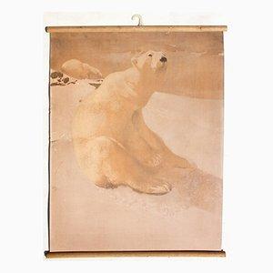 Lithograph Educational Chart of a Polar Bear by Karl Jansky, 1914